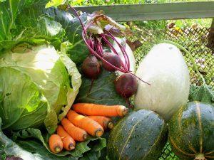 Сезонный абонемент на онлайн-консультации по садоводству