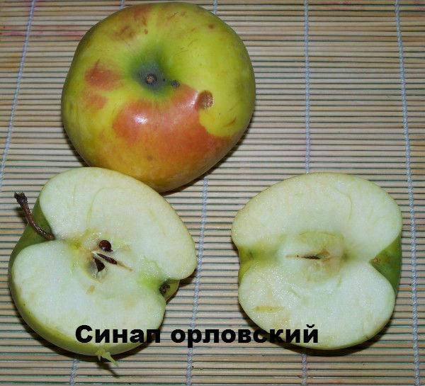 синап орловский