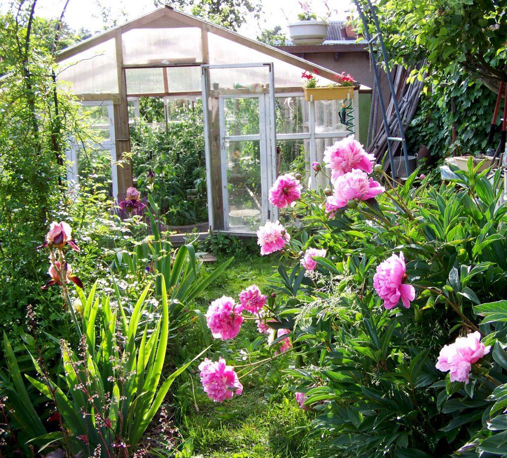 Работы в саду и на огороде