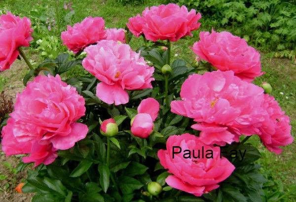Paula Fay