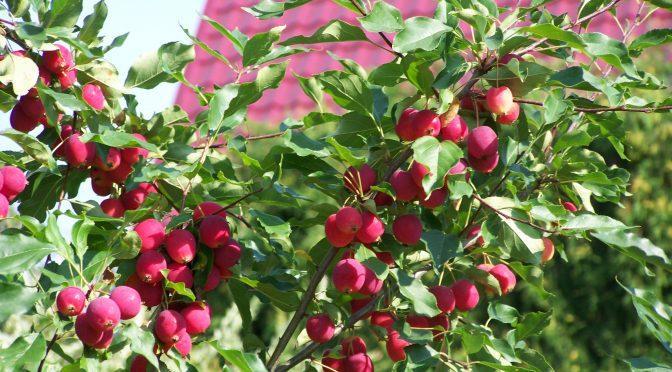 Плодовый сад: от мечты до реальности