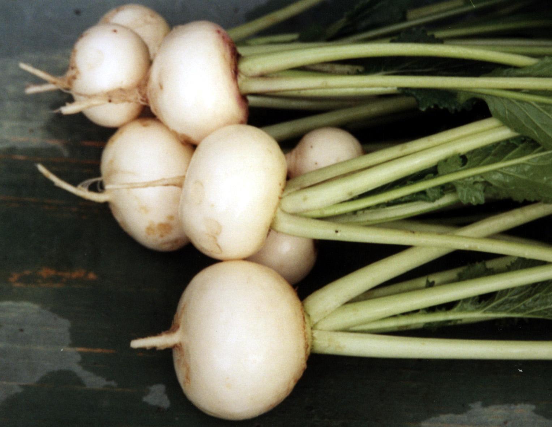 Репа для осеннего урожая