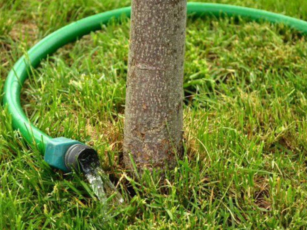 Не жалейте воды, напоите свой сад