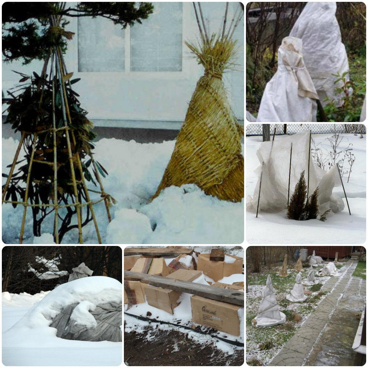 Кому и какое нужно укрытие на зиму