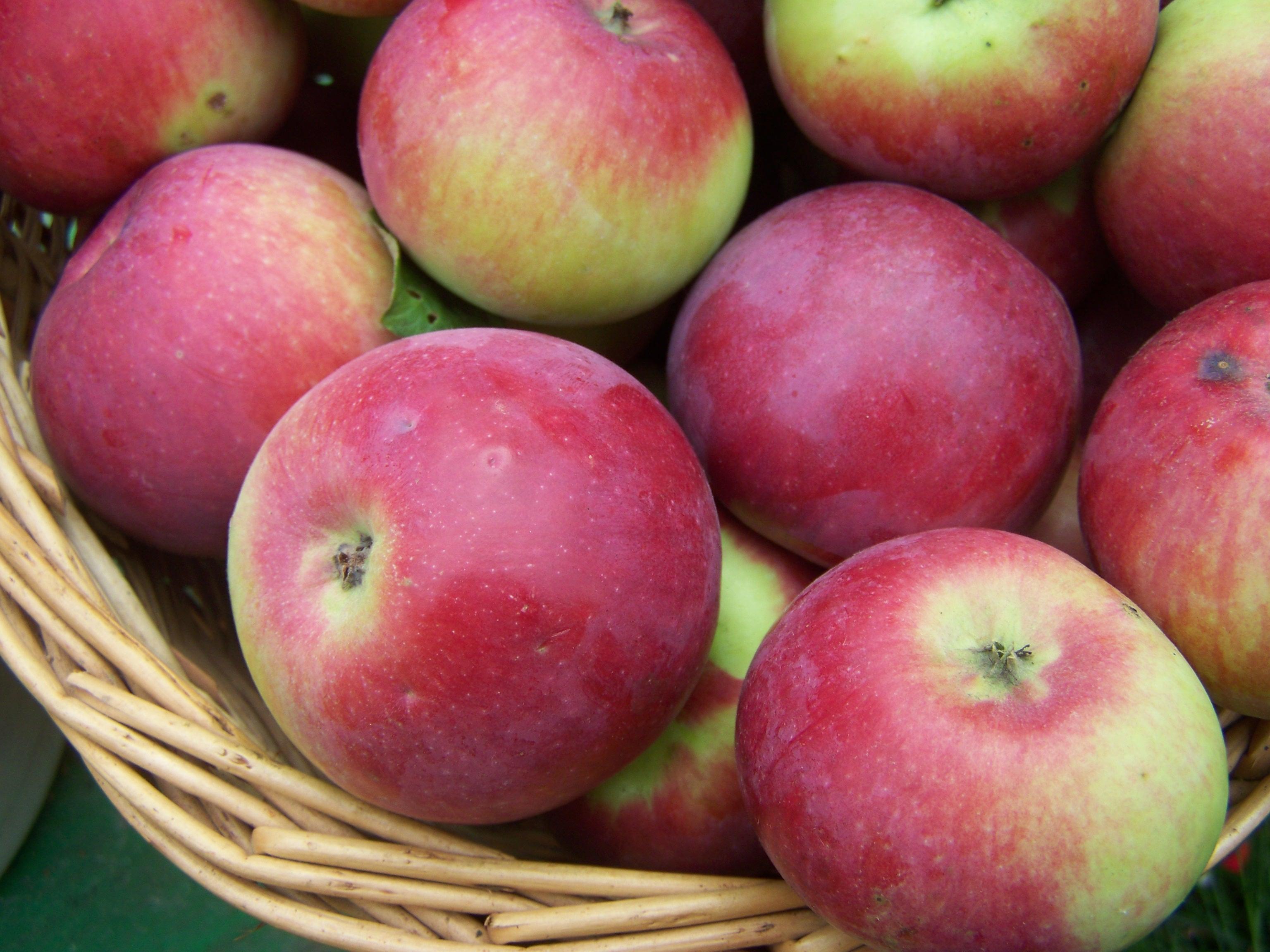 Самые ароматные яблоки русского сада