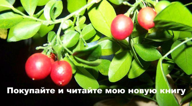 Целебные силы комнатных растений