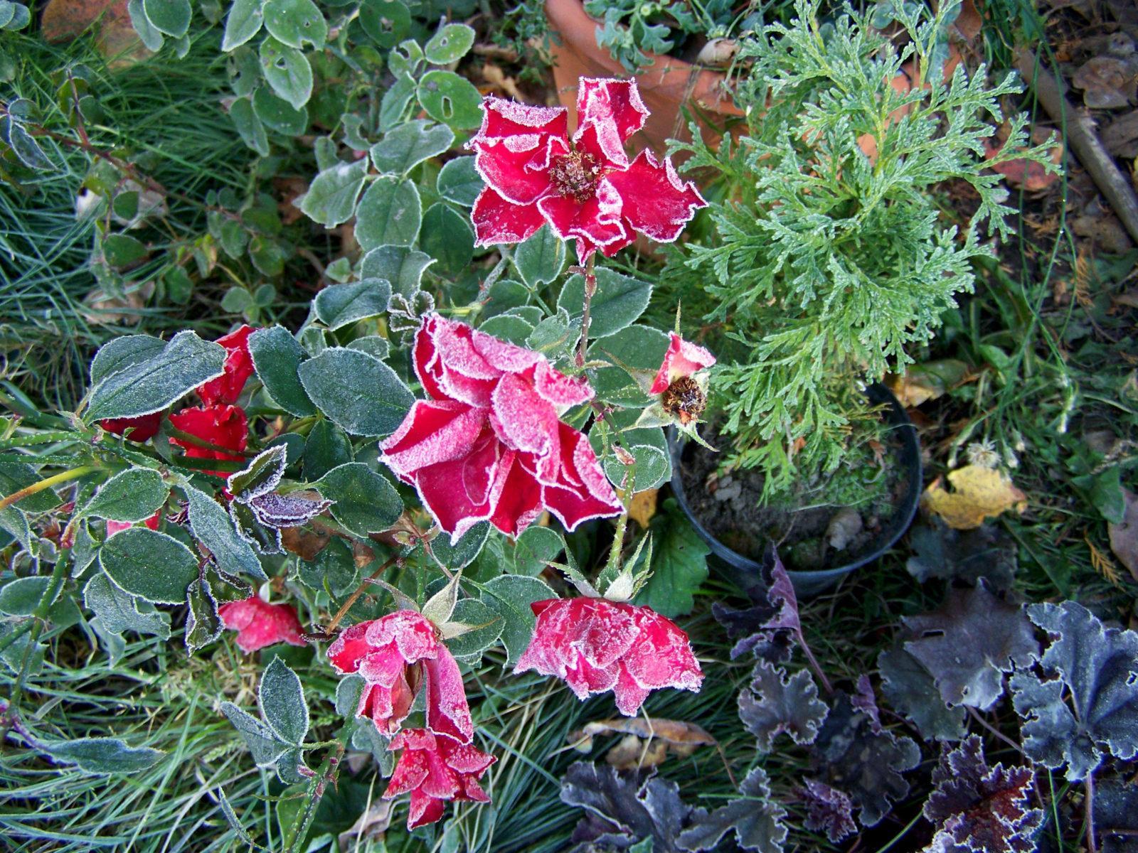Октябрь: работы в декоративном саду