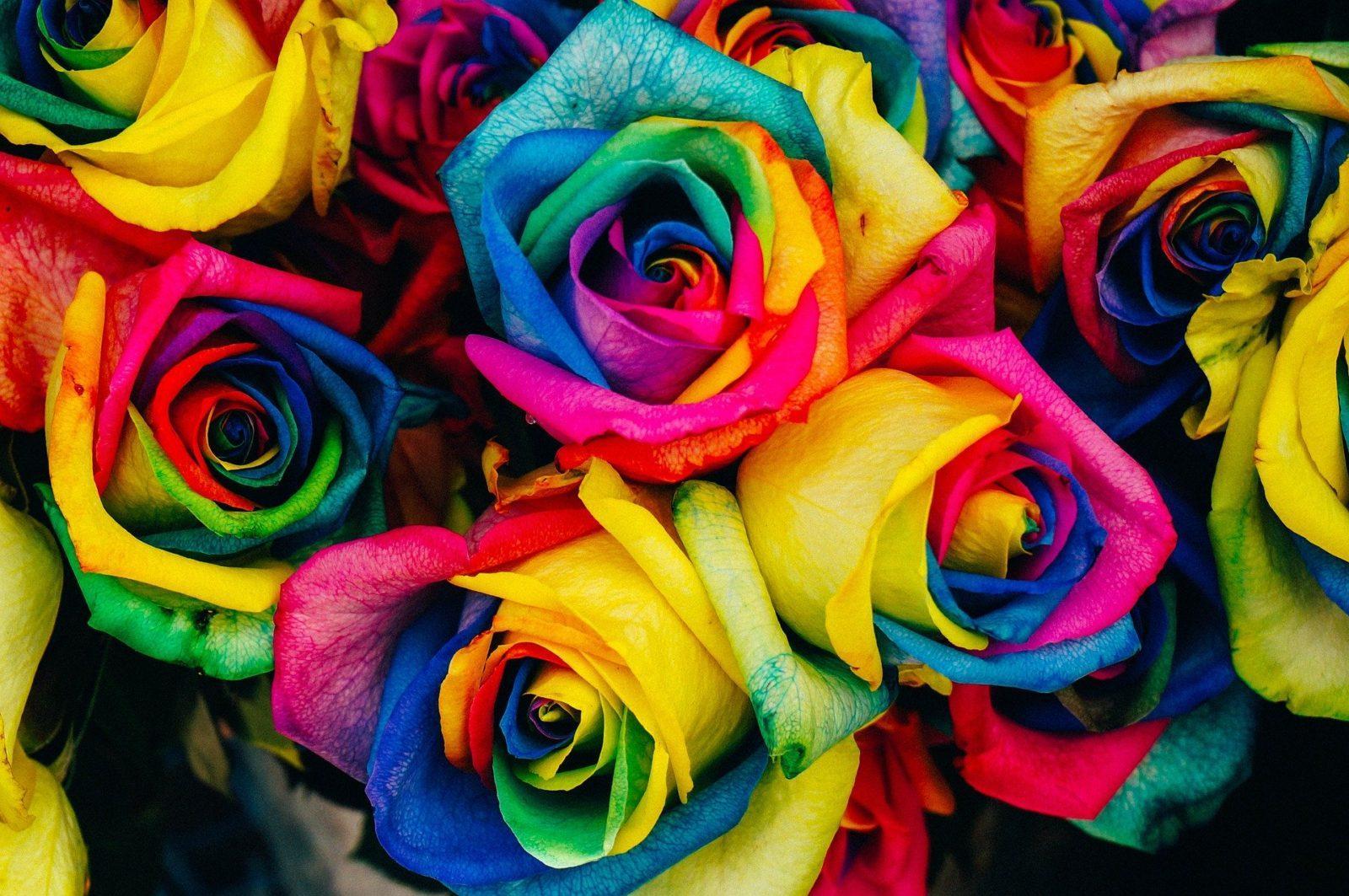Хамелеоны и прочие удивительные розы