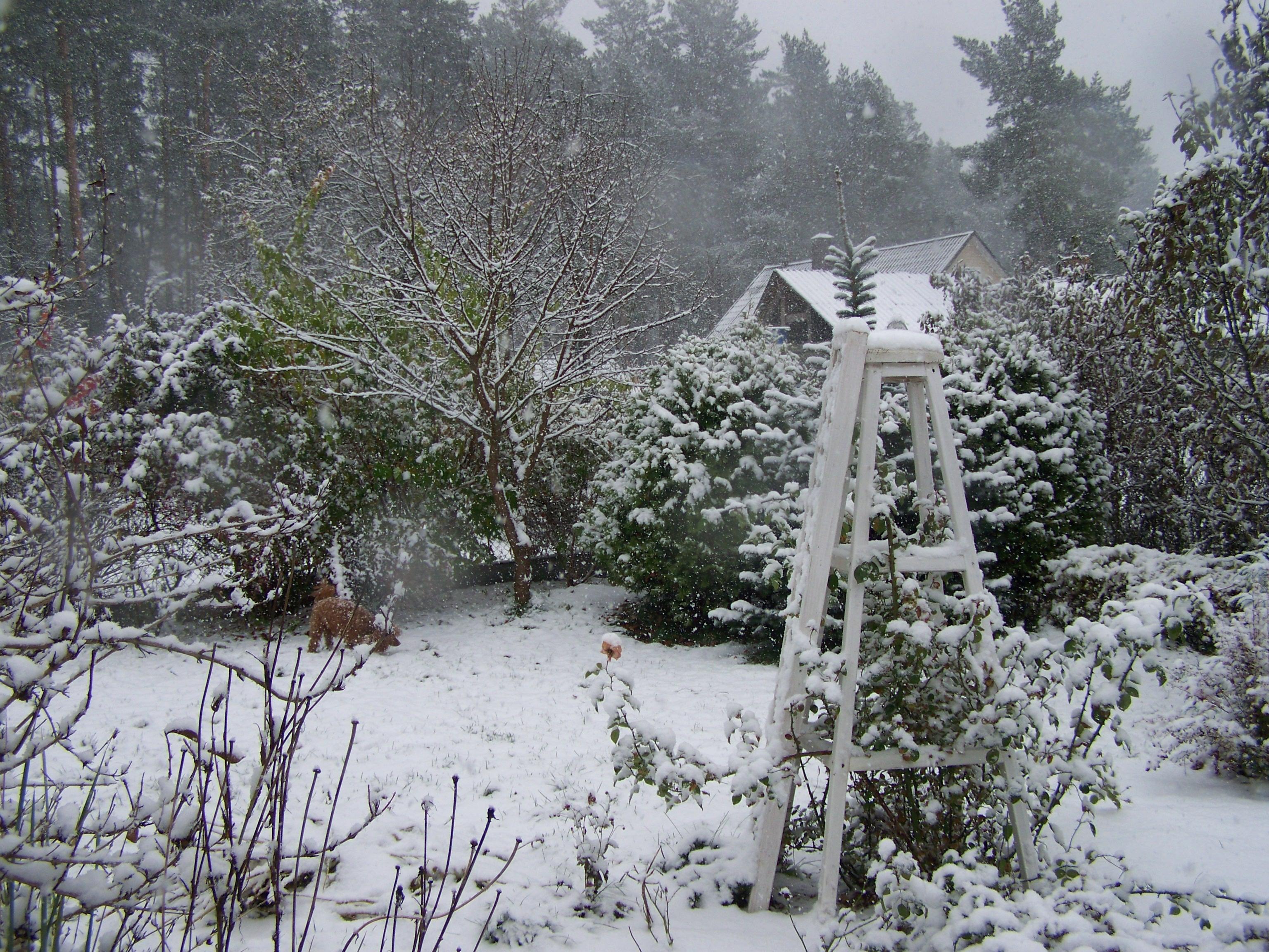 Декабрь: работы в саду и огороде