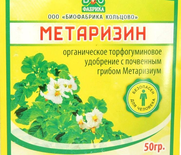 Метаризин – полезный гриб, но...