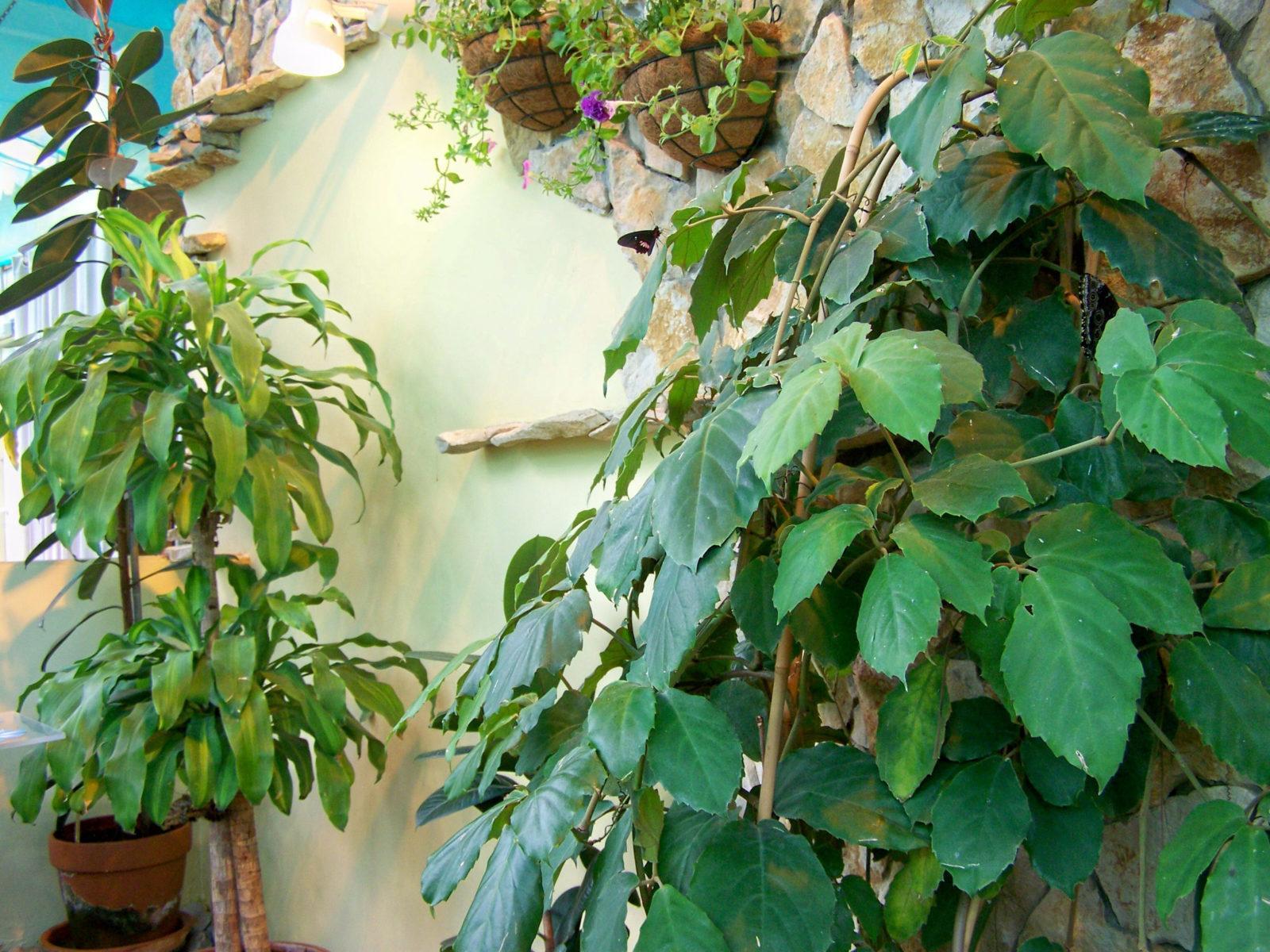 Зимний сад …на балконе