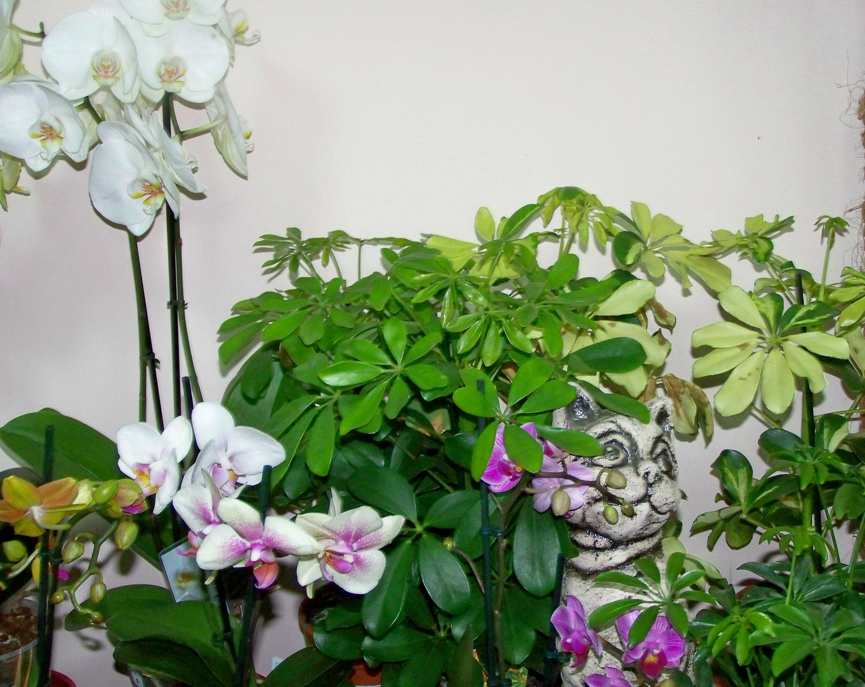 Комнатные растения: польза несомненна!