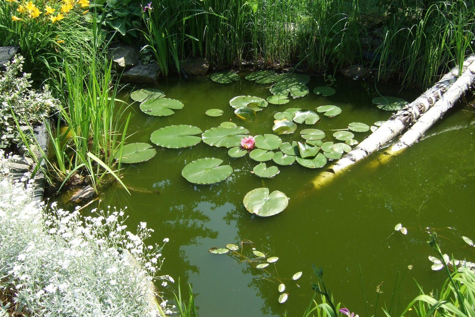 Почему «цветет» пруд