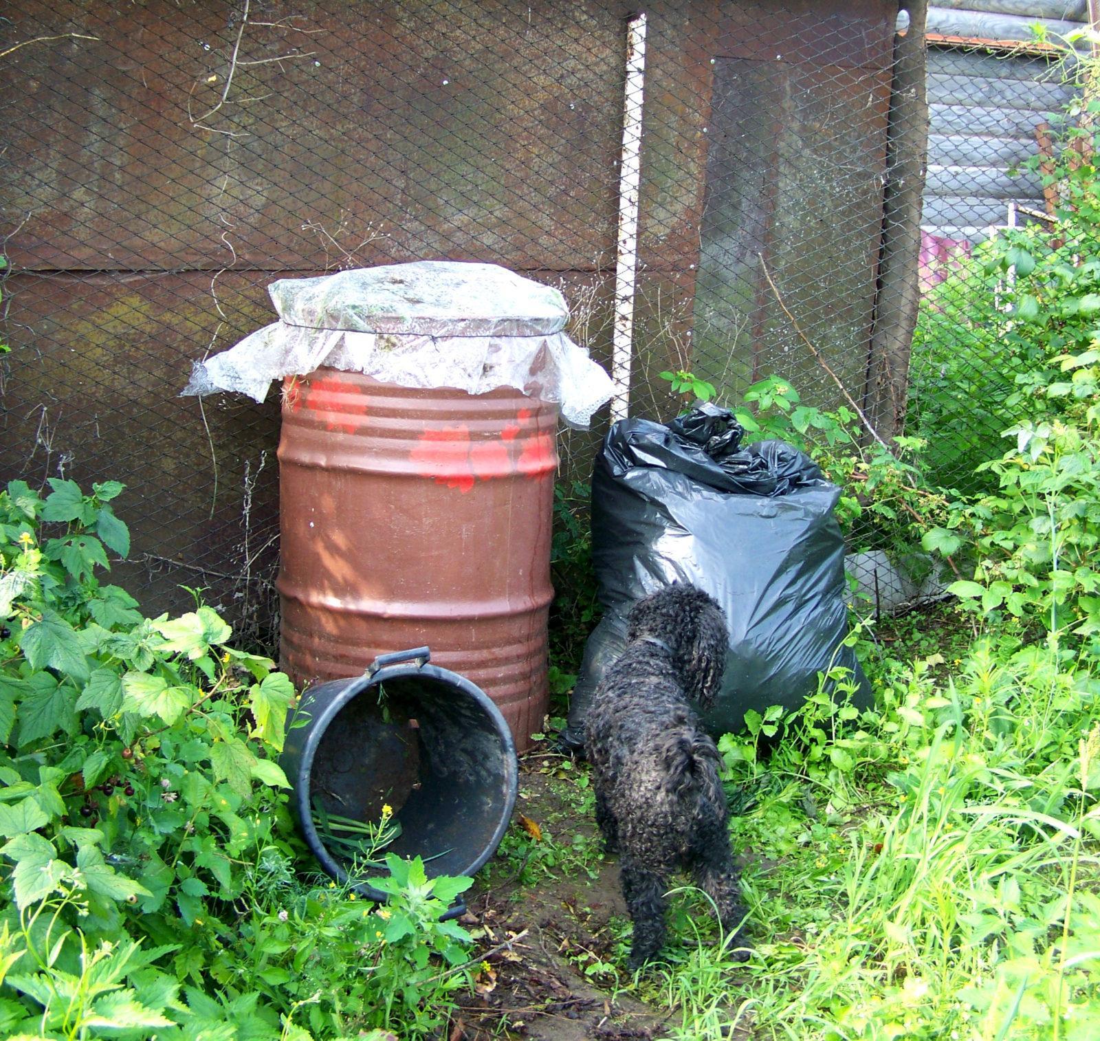 Organik: отходы превратим в доходы