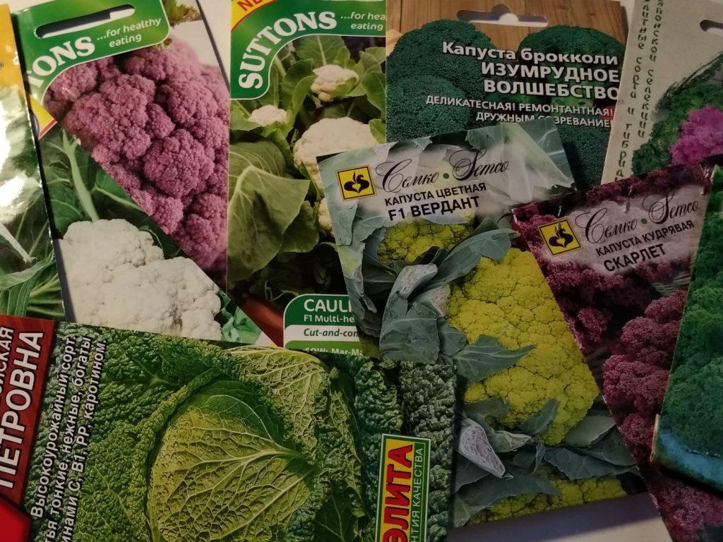 Как подготовить семена капусты к севу