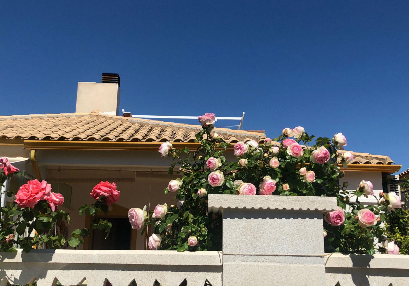 Розовый сад в Аликанте