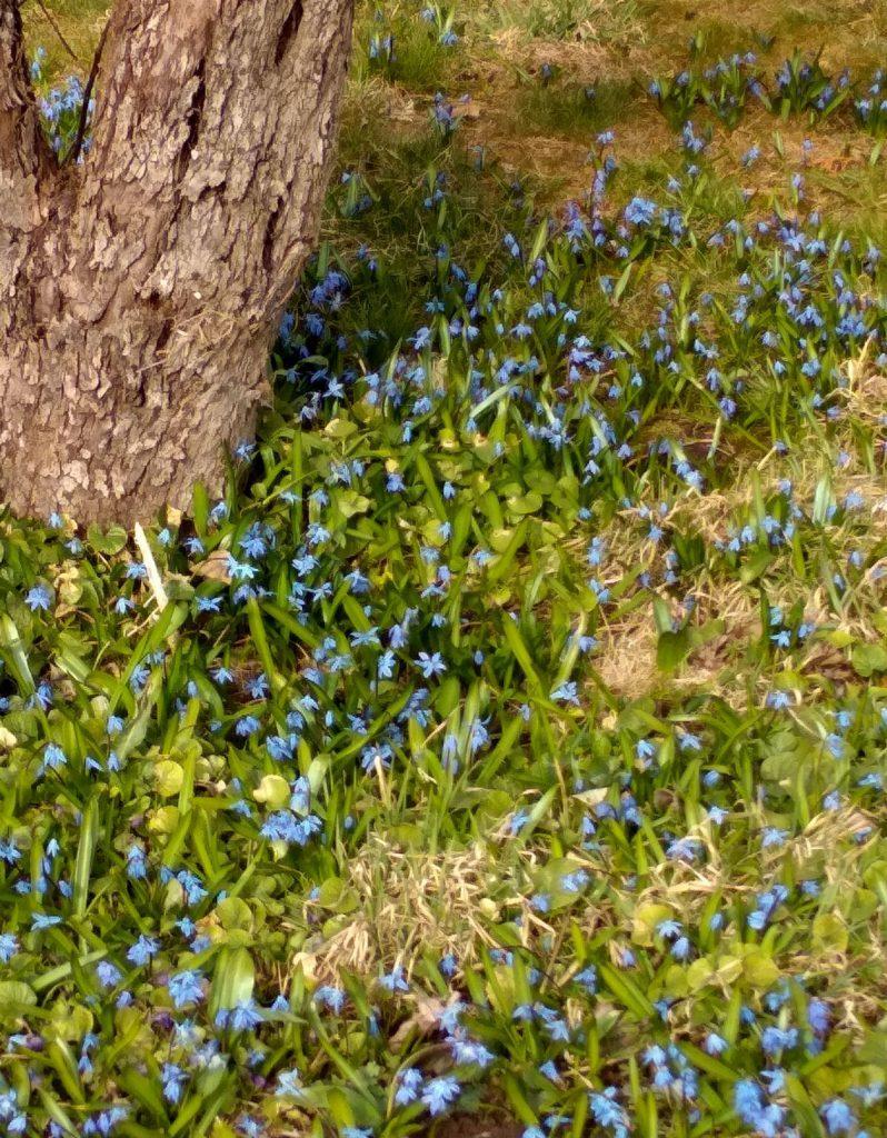 Сад в апреле