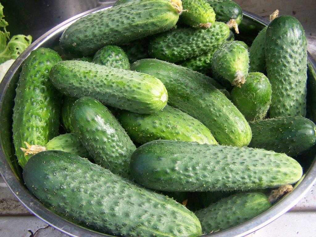 Огурцы: все секреты большого урожая