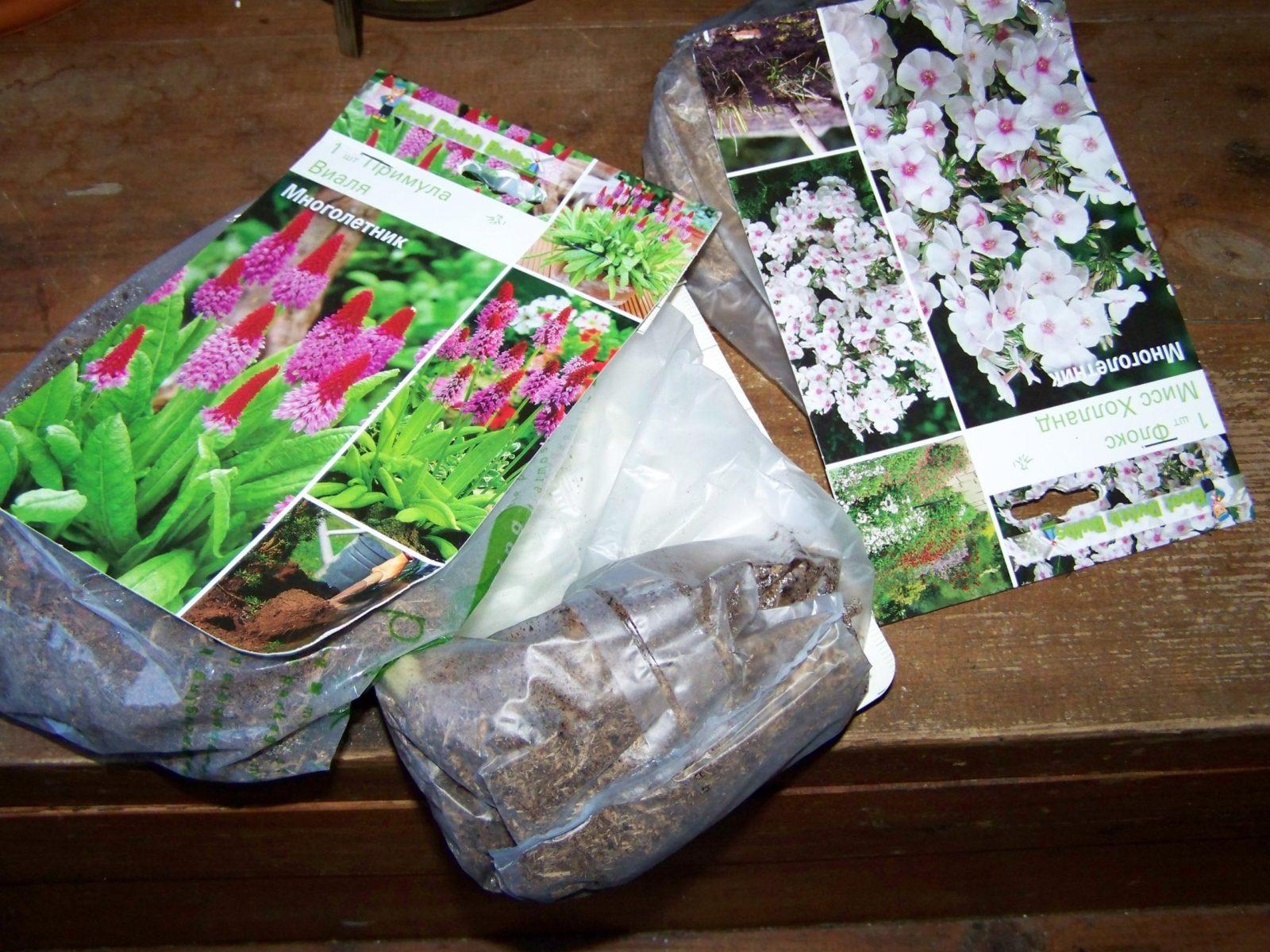 Как сохранить корневища и луковицы цветов