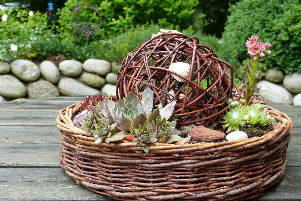Подарочные композиции из комнатных и садовых растений