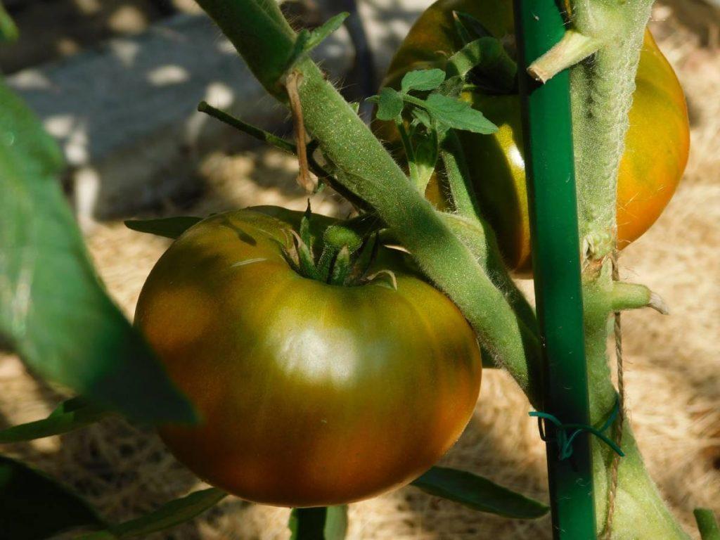 Ромовая баба – роскошный томат